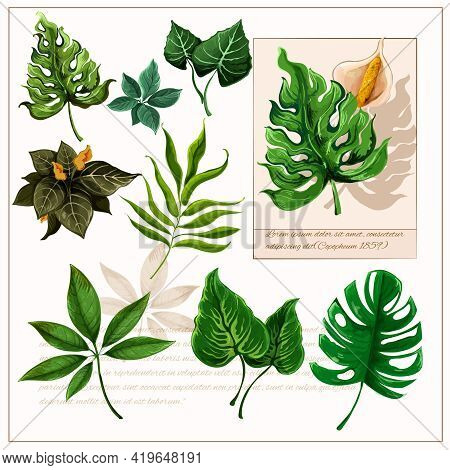 Exotic Tropical Rainforest Plants Opulent Green Leaves Pictograms Collection With Watercolor Sketch