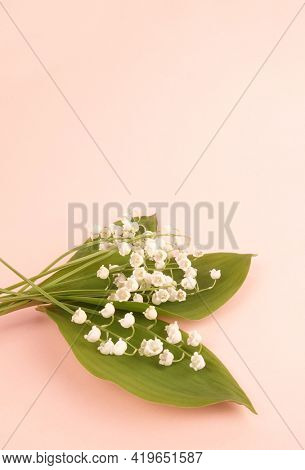 Lily of the valley Convallaria majalis bouquet May spring flower on pink background