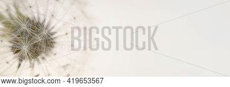 Dandelion Seeds.floral Banner. Dandelion Close-up On A Beige Background.dandelion Seeds Texture. Lig