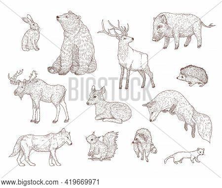Different Forest Animals Engraved Illustrations Set. Hand Drawn Vintage Sketch Of Rabbit, Bear, Deer
