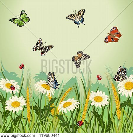 Illustration With Flowers And Butterflies.chamomile, Ears And Butterflies On A Colored Background In