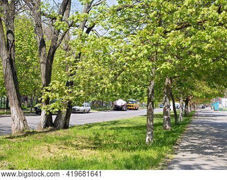 Bright Greenery Of Blossoming Spring Foliage Adorned An Alley In One Of The Residential Areas Of The