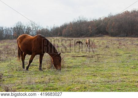 Horse Grazing Spring Meadow Green Grass. Rural Peaceful Atmospheric Landscape. Young Brown Horses Gr