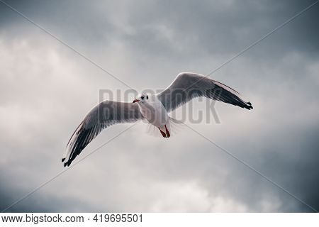 Close-up Of A Sea Gull In The Sky With Clouds