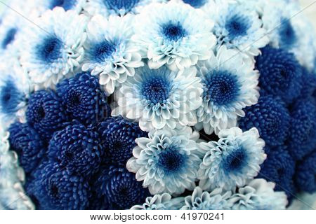 White And Blue Flower Background