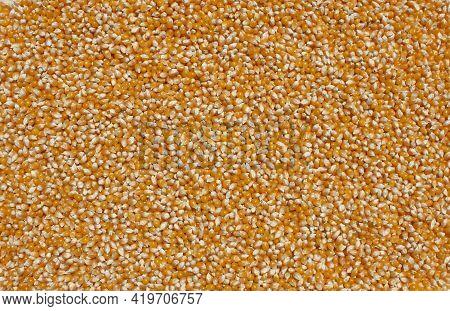 Popcorn Kernels Natural Fresh Food Background Closeup Details Overhead View