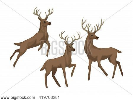 Deers In Different Poses, A Deer Is Jumping And Standing. Vector Character. Isolated Object On A Whi