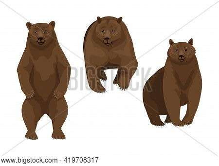 Brown Bear, Three Different Poses Of A Wild Animal, Forest Predator Vector Character Illustration On