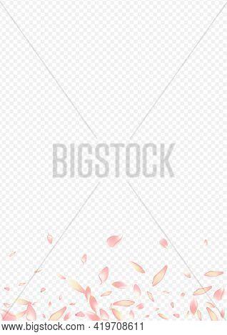 Red Bloom Vector Transparent Background. Blossom Springtime Illustration. Rose Japanese Design. Bloo