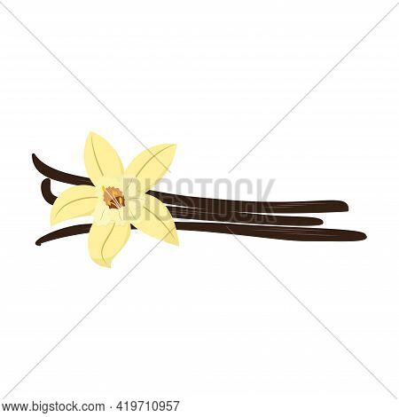 Beautiful Vector Vanilla Flower With Dried Vanilla Sticks. Isolated On White. Flat Design
