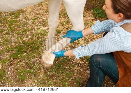 A Young Beautiful Female Vet Inspects A White Horse. Love, Medicine, Pet Care, Trust, Happiness, Hea
