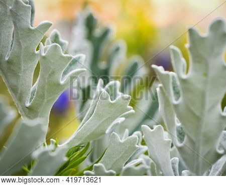 Unfocused Blur Summer Abstract Light Flower And Leaves Background, Pastel And Soft Card.