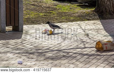 The Crow Rummages Through The Junk Food Packaging. Environmental Pollution, Environmental Damage To