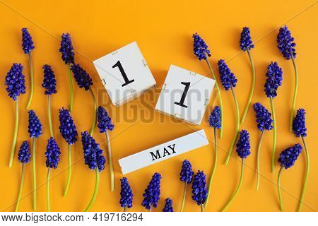 Calendar For May 11: Cubes With The Number 11, The Name Of The Month Of May In English, Scattered Fl