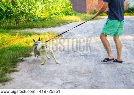 Defocus Young Man Walking With A Dog (siberian Laika Husky) In The Village, Countryside. Summertime,