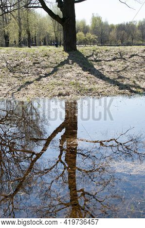 Reflection Of A Tree Trunk And Branches In The Water. Early Spring In A City Park, Reflection Of A T