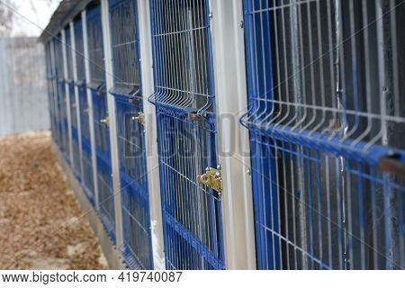 Lattice Doors Of Dog Enclosures In The Shelter