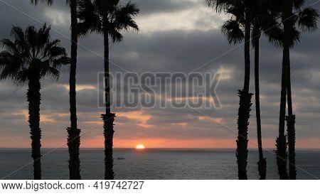 Palms Silhouette On Twilight Sky, California Usa, Oceanside. Dusk Gloaming Nightfall Atmosphere. Tro