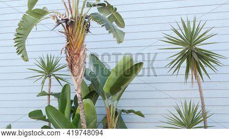 Strelitzia Bird Of Paradise Flower, California Dreaming Usa. Summertime Aesthetic Of Santa Monica An