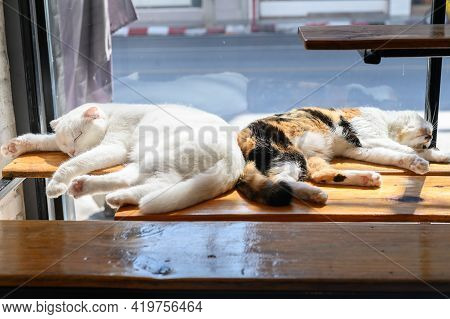 Couple Of Cats Sleeping On Wooden Table In Cat Cafe. Cat Cafe Is A Theme Cafe Whose Attraction Is Ca