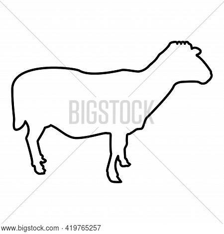 Sheep Ewe Domestic Livestock Farm Animal Cloven Hoofed Lamb Cattle Contour Outline Black Color Vecto