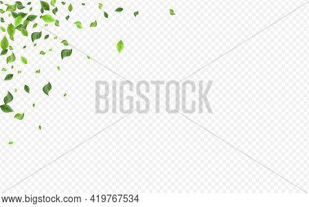 Grassy Leaf Falling Vector Transparent Background
