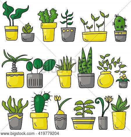 A Set Of Indoor Various Plants In A Doodle Style, Different Types Of Blooming And Not Only Indoor Pl