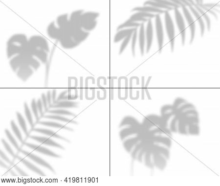 Plant Shadows. Realistic Palm Leaves Overlay Shadow, Transparent Tropic Tree Foliage Wall Overshadow