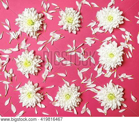 Creative Romantic Concept. Frame Of White Flowers And Chrysanthemum Petals On A Pink Pastel Backgrou