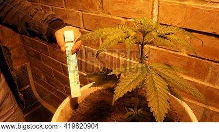 Indoor Temperature Control When Growing Cannabis In A Domestic Environment, Partially Visible Person
