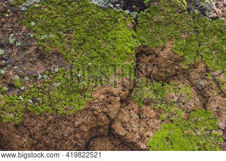 Natural Background Of Mountain Cracked Rock With Bright Green Lichen, Closeup Mossy Sandal Stone Tex
