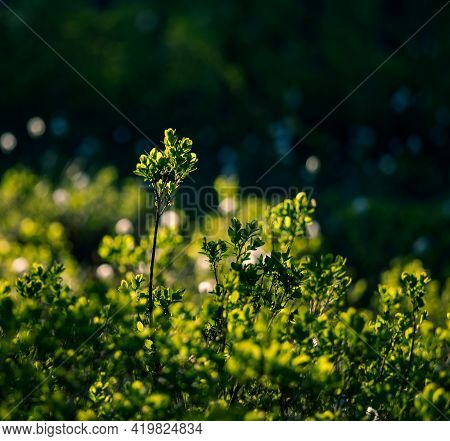 A Beautiful Summertime Scenery With Local Vegetation. Rural Scenery Of Northern Europe.