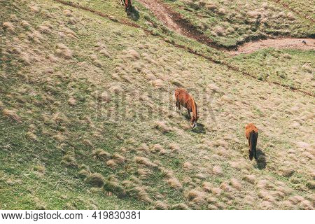 Horses Grazing On Green Mountain Slope In Spring In Mountains Of Georgia.