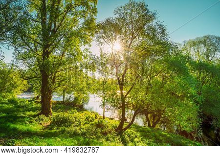 Sun Shining Through Branch And Foliage Of Oak Tree At Spring Season. Deciduous Forest Summer Nature