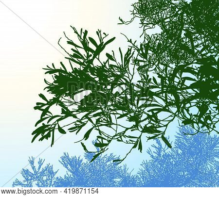 Landscape Illustration Of Silhouette Branches Of Deciduous Tree In Morning Forest