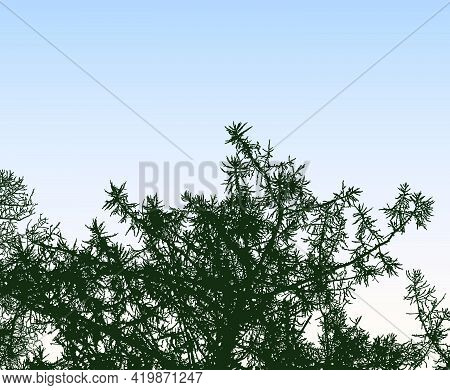 Illustration Of Silhouettes Branches Of Spruce Tree Against Morning Sky