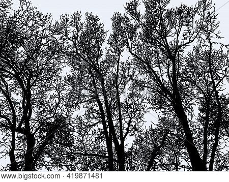Illustration Of Silhouettes Deciduous Bare Trees In Winter Forest