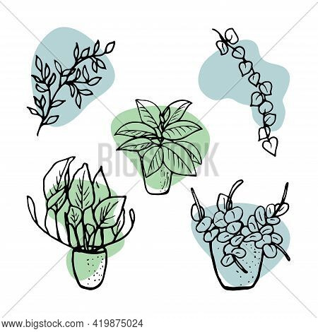 Home Plants. Set With Vector Houseplants, Icons. Linear Illustration Artistic Lines And Strokes. Set