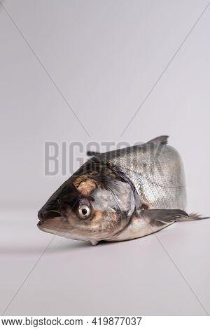 Close-up Of A Fish. Fresh Silver Carp Fish. Fish Shop Products