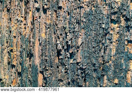 Forestry Concept. Rustic Wooden Background. Colored Abstract Wallpaper, Copy Space.