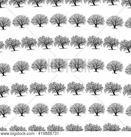 Seamless Pattern Of Sketches Silhouettes Deciduous Bare Trees In Rows