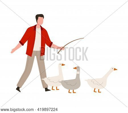 Man Farmer With Whip Punching Geese Vector Illustration