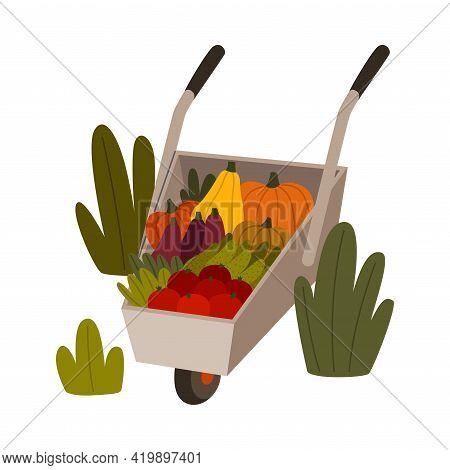 Ripe Vegetables In Wheelbarrow As Seasonal Harvesting And Yield Vector Illustration
