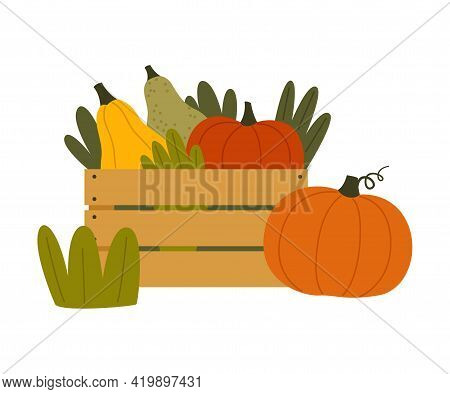 Ripe Pumpkin Vegetable In Wooden Crate As Seasonal Harvesting And Yield Vector Illustration