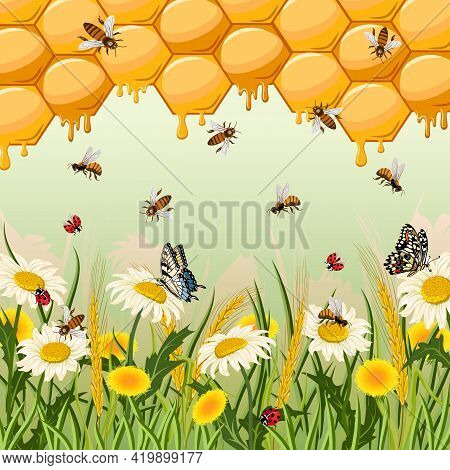 Illustration With Insects And Flowers.chamomiles, Dandelions, Insects And Honeycomb In Color Vector