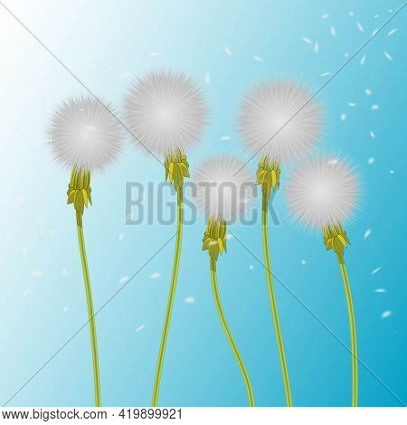 Vector Illustration Of 5 Realistic White Fluffy Dandelion. Five Dandelions Blowing In The Wind And F