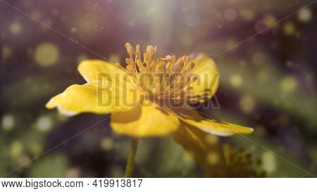 Yellow Wildflower Close-up. Wildflowers Natural Background Postcard