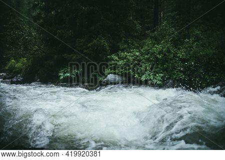Green Forest Landscape With Wild Thickets Near Powerful Mountain River. Blurred Power Turbulent Rapi