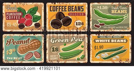 Bean, Peanut, Coffee And Green Pea Tin Signs Of Vector Farm Food And Legume. Fresh Coffee Beans And