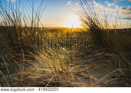 Peaceful Beach Dunegrass And Sunset Photo For Calming Relaxation Summer Getaway Concept.
